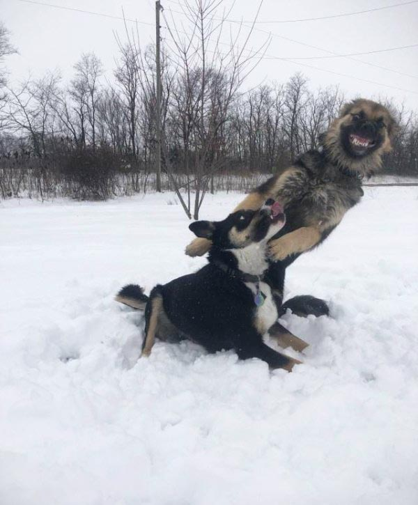35 Funny Memes and Random Pics to Fuel Your Humor ~ crazy dogs in snow