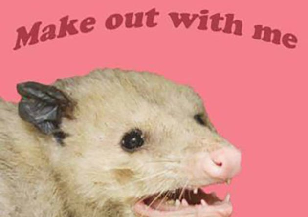 35 Funny Pics and Random Pics to Fuel Your Humor ~ opossum make out with me kiss
