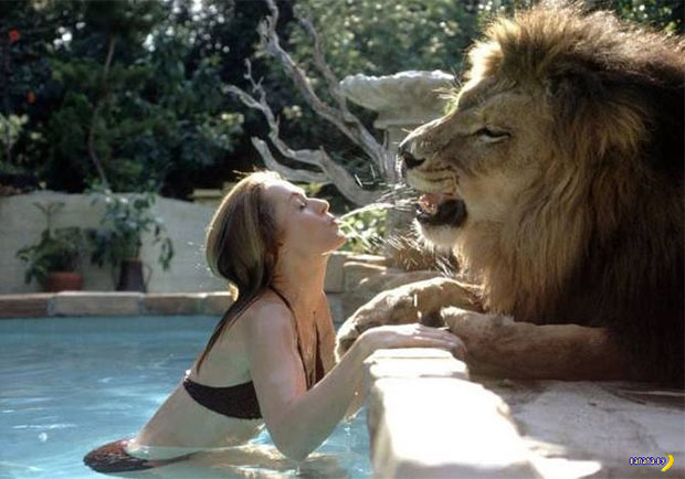 31 Best Memes and Funny Pics That'll Wet Your Eyeballs ~ woman in pool with lion