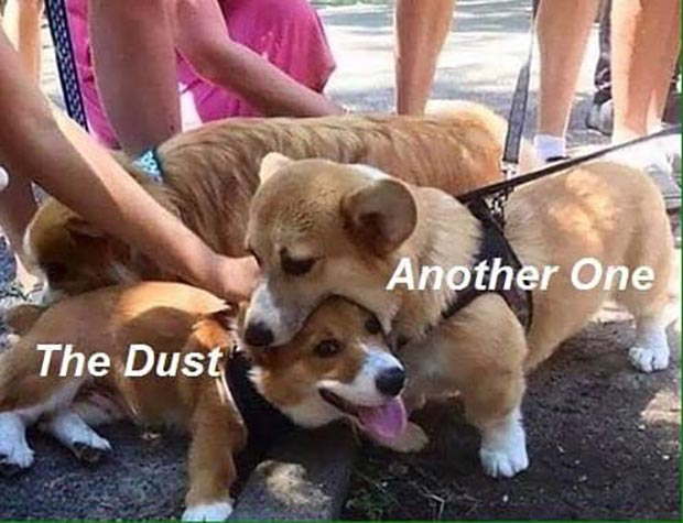 35 Funny Memes and Random Pics That'll Twerk Your Humor ~ dogs corgis another bites the dust