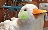 my duck