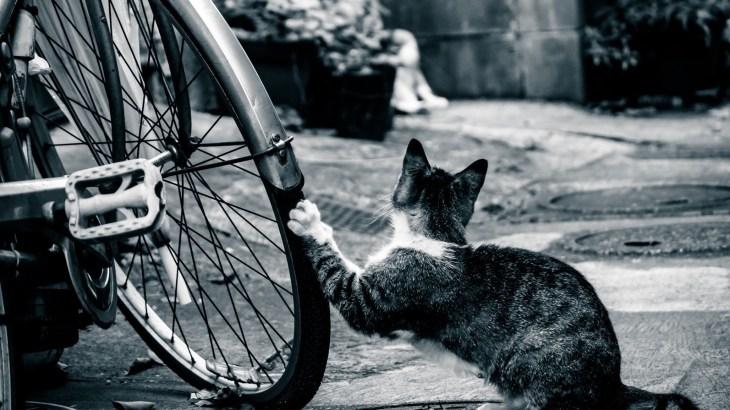 【自転車を使う方必見!】自転車保険に加入してもしもに備えよう!