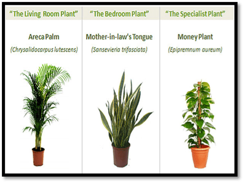 Indoor Plants importance and indoor plants names