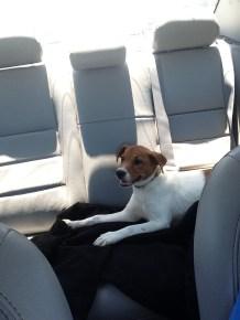 """Driving to Petsmart"""