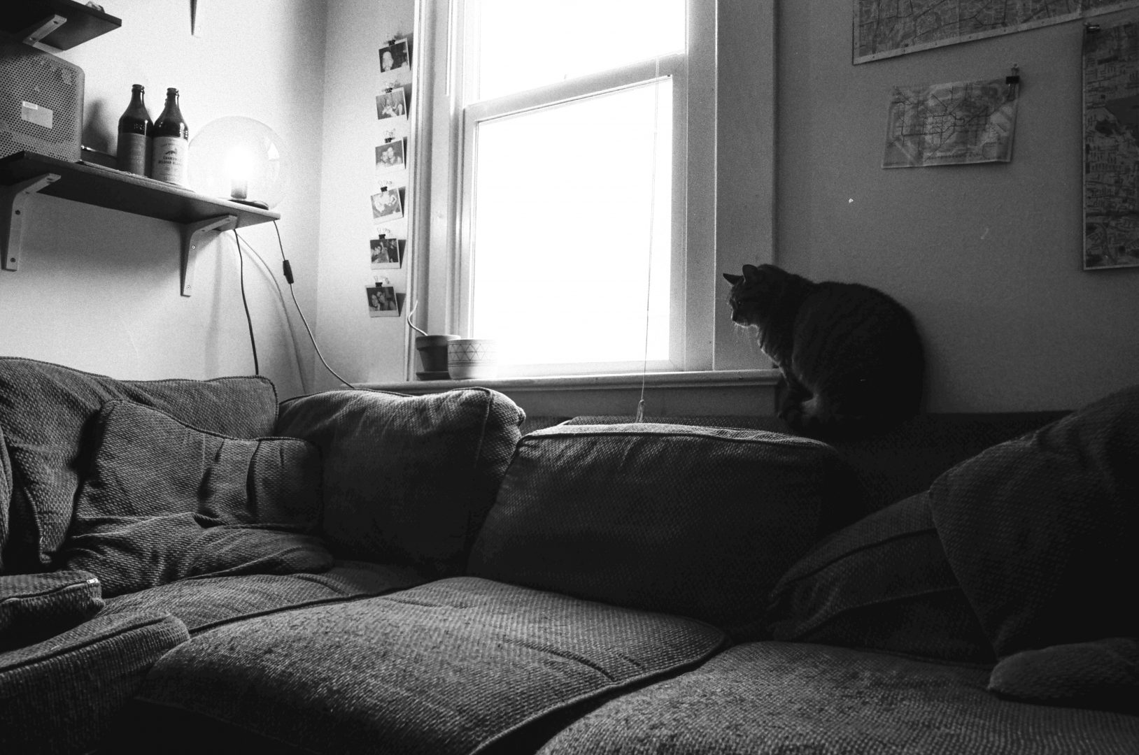 grayscale photo of cat on couch