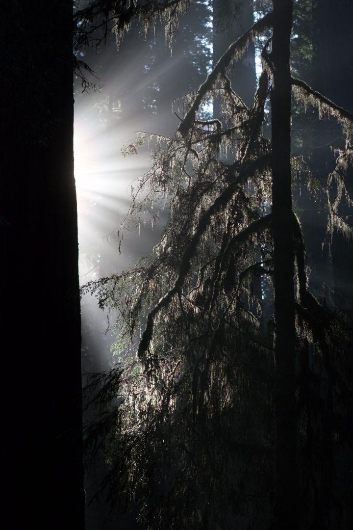 black tree under blue sky during daytime