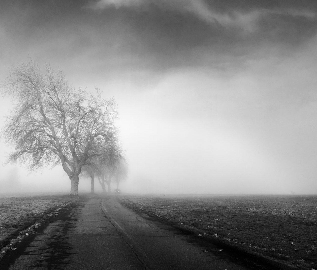 bare tree beside road