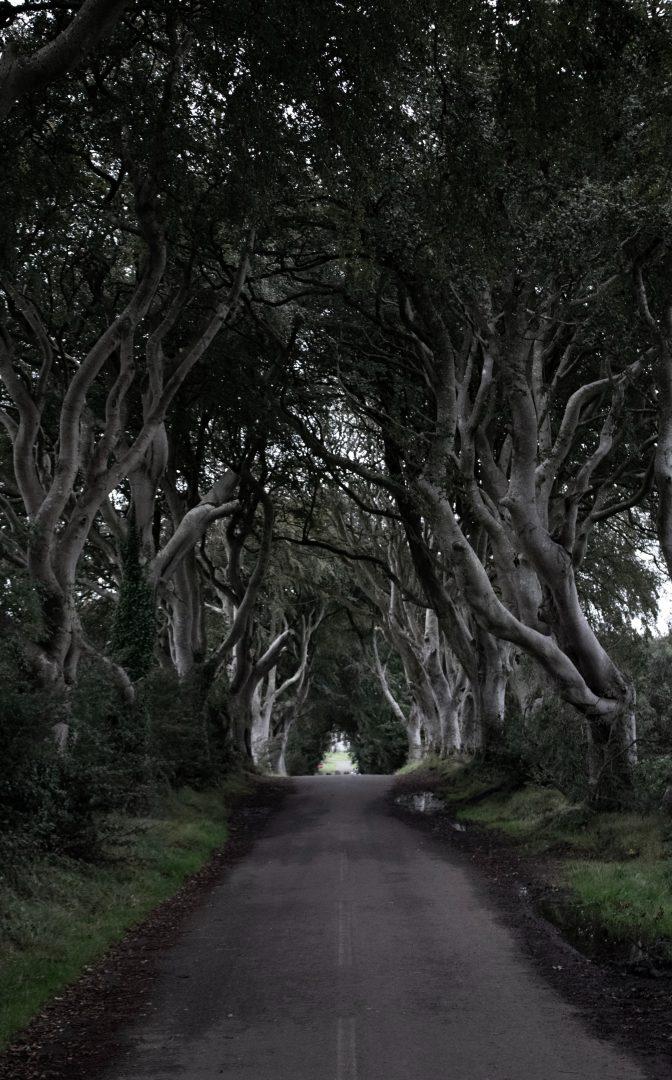 road between green-leafed trees