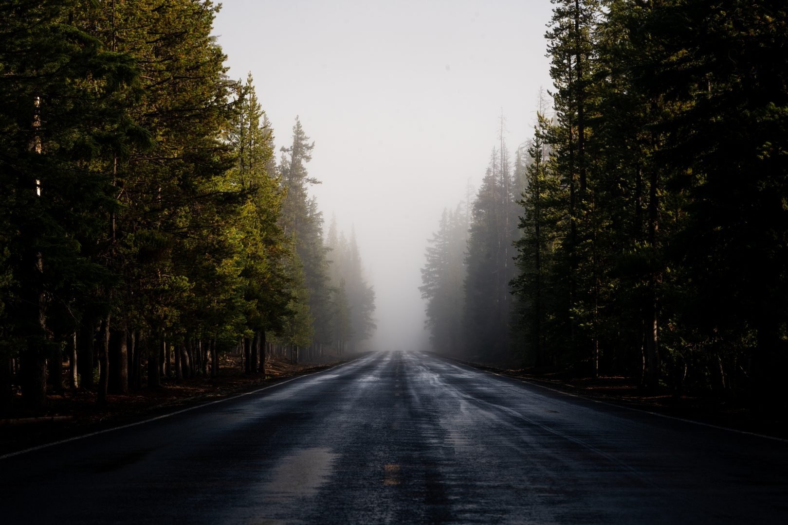 gray asphalt road between green trees during foggy day
