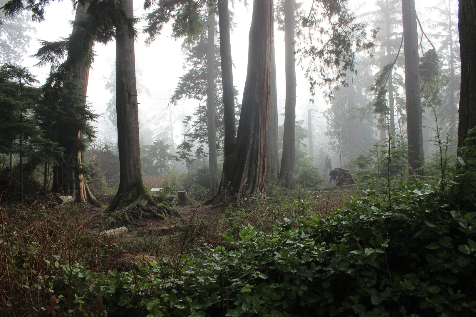 forest surrounded by fog at daytime