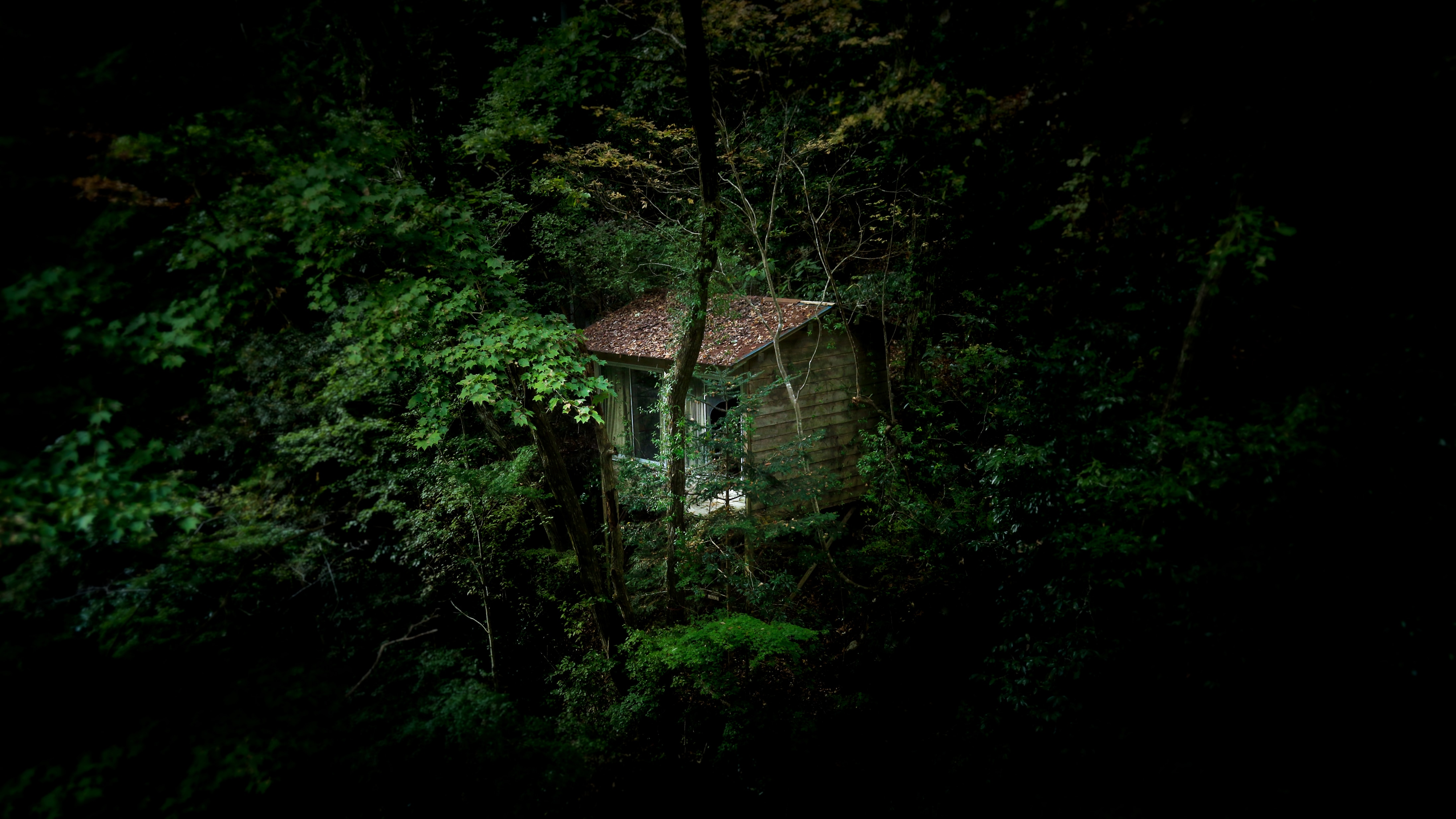 brown wooden house in the middle of forest