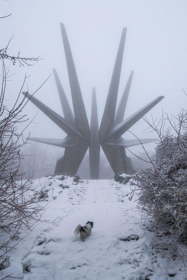 medium-coated black and white dog walking on snowfield