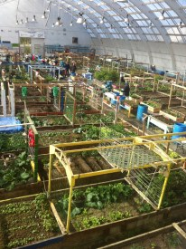 Inuvik Community Garden Greenhouse from above