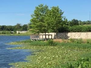 Lake @ Black Hoof Park