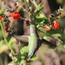 Birding and Priscilla