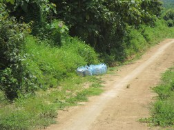 Bags of rubber sap await collection
