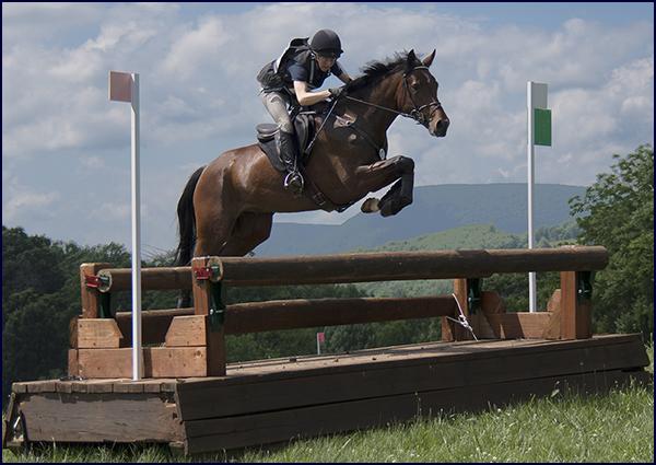 Windchase Horses for Sale
