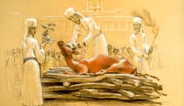 Madera, hisopo y escarlata