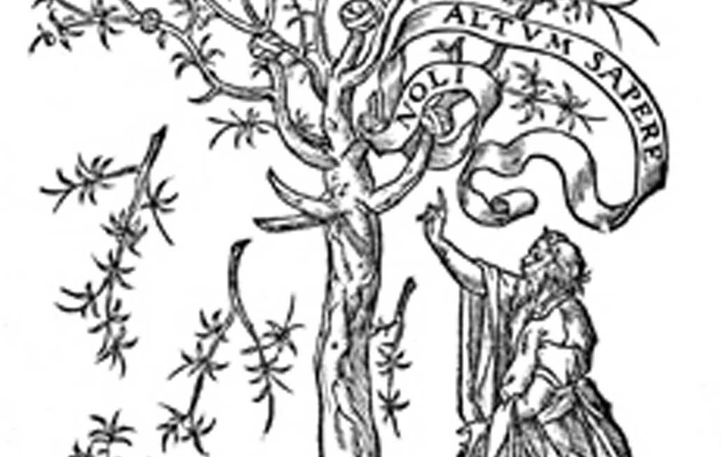Alegoría del olivo (Parte II)