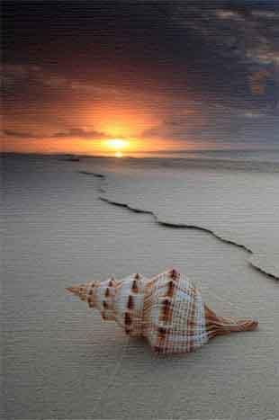 La luz y la verdad en el ecosistema