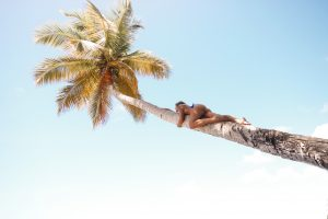 Taylor climbing a palm tree at the best beach in Grenada