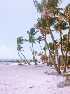 palm trees lining smather's beach in key west