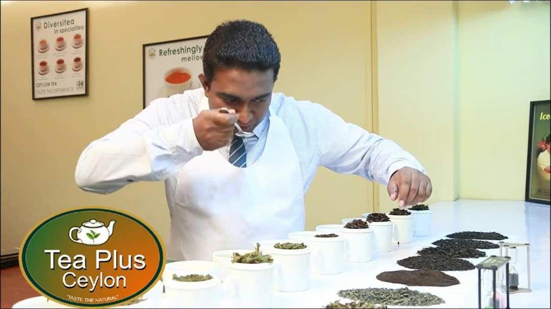 ceylon loose leaf tea, Tea Plus US