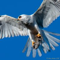 birds - MEM_3199.jpg