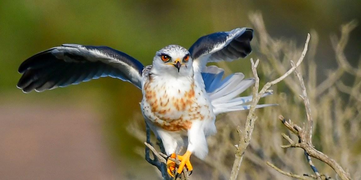 birds - 850_1548.jpg