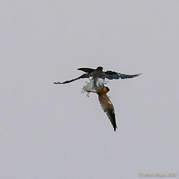 birds - 850_1734.jpg