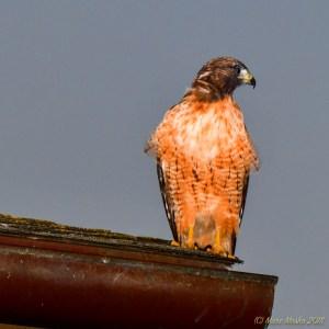birds - 850_3658.jpg