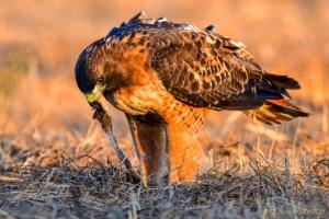 birds - 850_4074.jpg