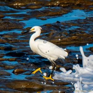 birds - 850_4754.jpg
