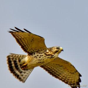 birds - 850_6715.jpg