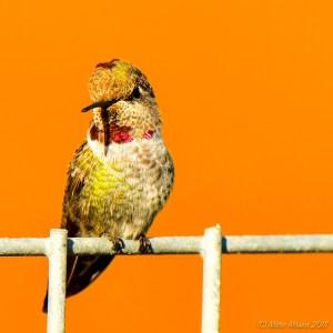 birds - 850_7573.jpg