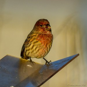 birds - 850_8062.jpg