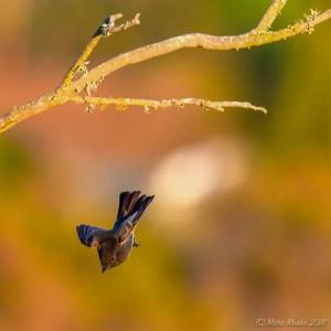 birds - 850_8103.jpg