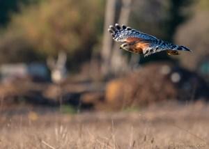 birds - 850_8549.jpg