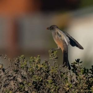 birds - 850_8856.jpg