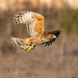 birds - 850_8915.jpg