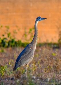 birds - 850_9127.jpg