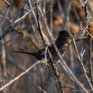 birds - 850_9828.jpg