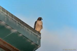 birds - DSC_0099.jpg