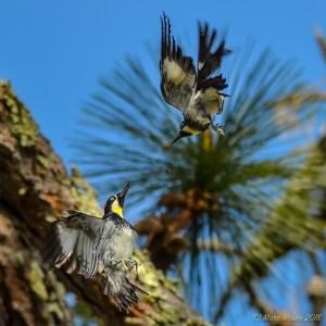 birds - DSC_1499.jpg