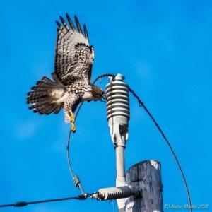 birds - MEM0066.jpg
