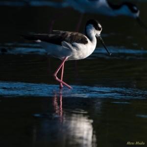 birds - MEM1039-Edit.jpg