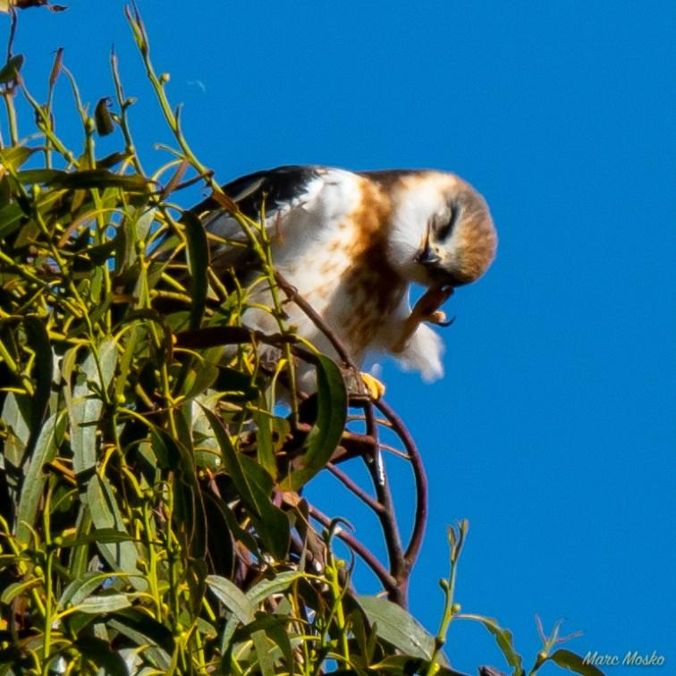 birds - MEM_3072.jpg