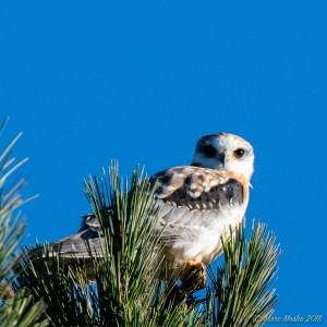 birds - MEM_3109.jpg