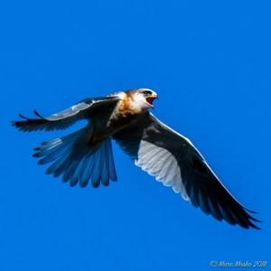 birds - MEM_3138.jpg