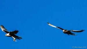 birds - MEM_3323-2.jpg